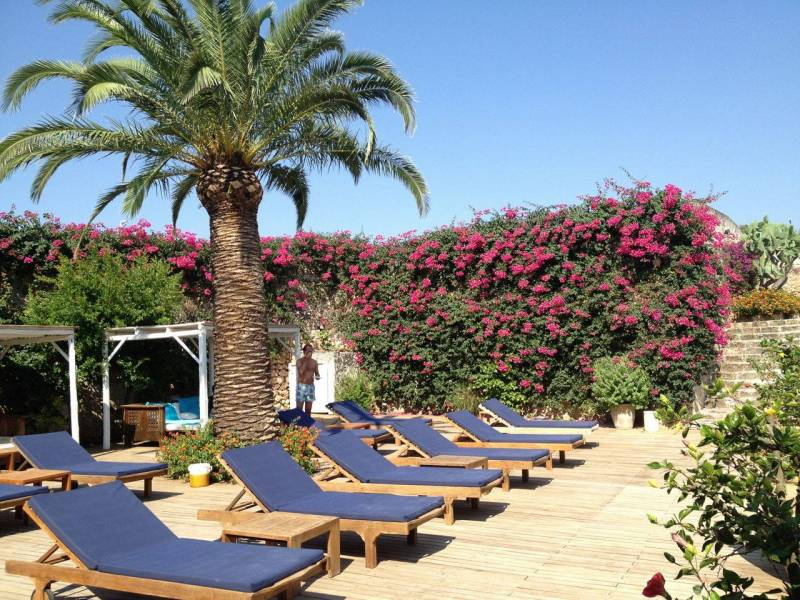 Pool terrace palm