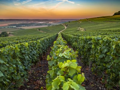 Private Tours in France of the Champagne region in France. A beautiful view during the sunrise.