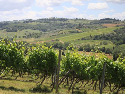 Private Wine Tours in Tuscany, Italy
